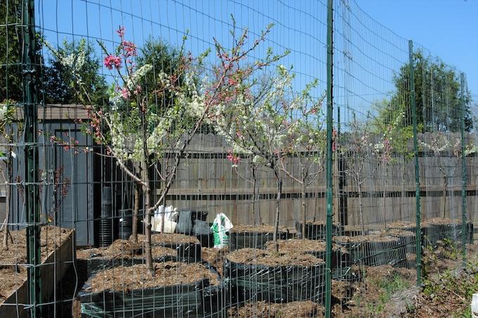 Baby trees growing in a nursery