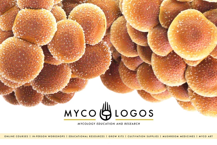 Online video courses on how mushrooms and other fungi can help humans, communities, and the environment.
