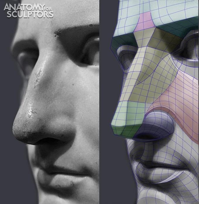 Imagen de Anatomy for scuptor con las planificaciones de la cara/ nariz escultura griega.