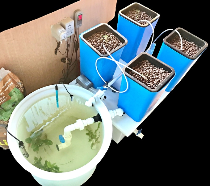 EPIC AquaGrow Mini  Fitted w/ Available Automated Add-Ons Including:  Titanium Water Heater  +  pH Sensor, Datalogger & Doser  +  Automatic Refill Float Assembly (Inside Clarifier/Bio-Filter). Expands Climate Tolerance & Reduces Labor/Maintenance to ONLY (1X) PER MONTH !