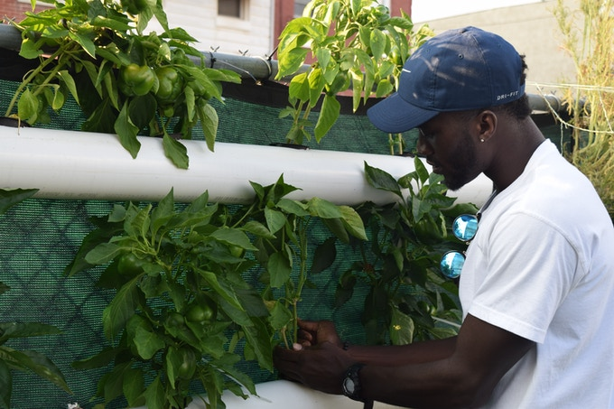 Sacred Seeds first Hydroponic Drip System!
