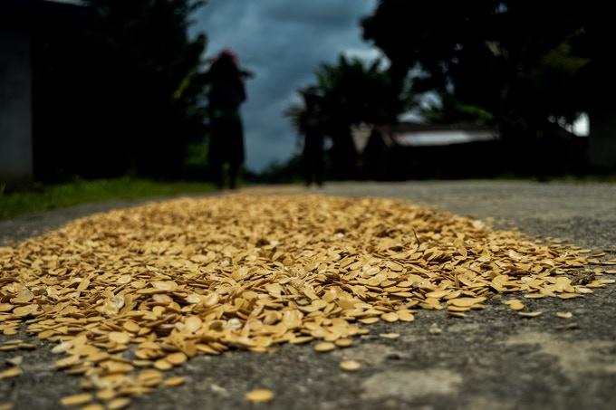 Egusi seeds being sundried.  In Nigeria, women are often the ones harvesting, processing, and selling these seeds, which are known to improve soil quality and have many nutritional benefits.Victoria Akere, Port Harcourt