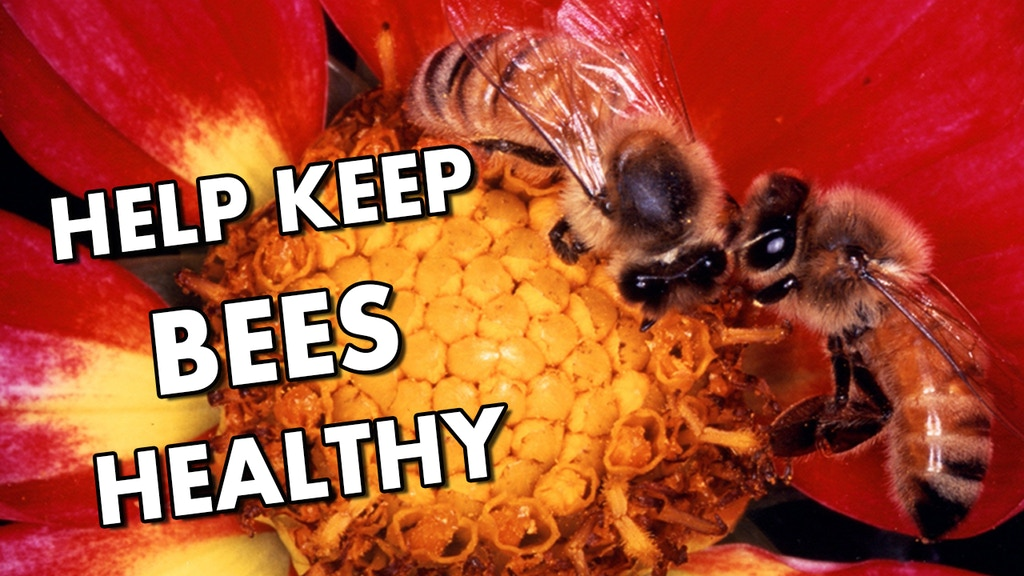 Bee Health Guru - a smartphone app for beekeepers project video thumbnail