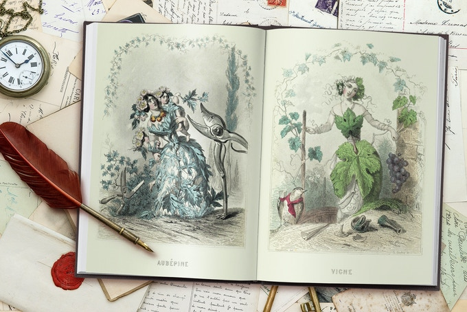 """Les fleurs animées"" / ""The Flowers personified"" steel engraving, handcolored"