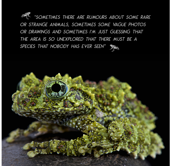 A true master of camouflage: mossy frog (Theloderma corticale)
