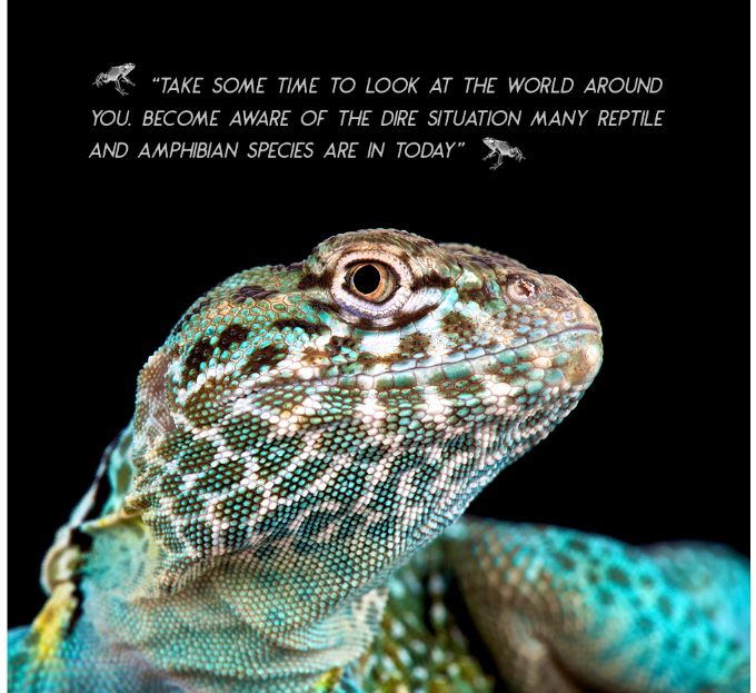 The Eastern collared lizard (Crotaphytus collaris collaris).They are able to run on their hind legs and reach 25 km/h!