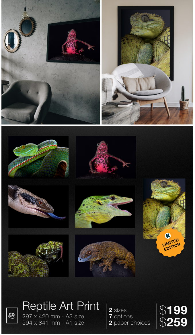 Order your art print featuring one of these cold blooded species: Siamese peninsula pit viper, Purple harlequin toad, Western blue-tongued skink, Emerald tree monitor, Mangshan pit viper, Giant bronze gecko, Spiny bush viper