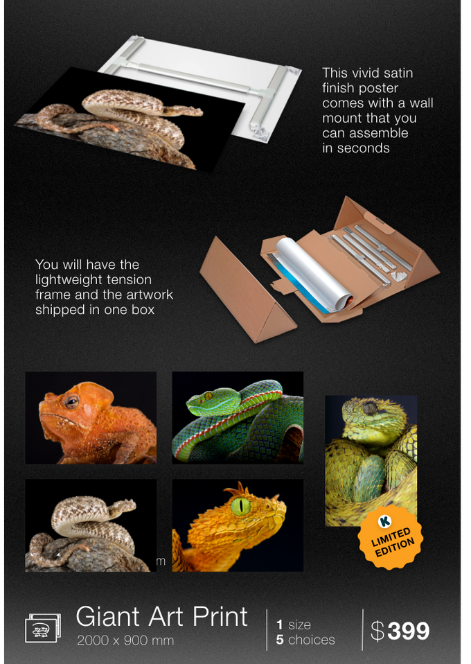 Order your giant art print featuring one of these cold blooded species: Guiana shield leaf toad, Siamese peninsula pit viper, Spider-tailed horned viper, Horned bush viper, Spiny bush viper