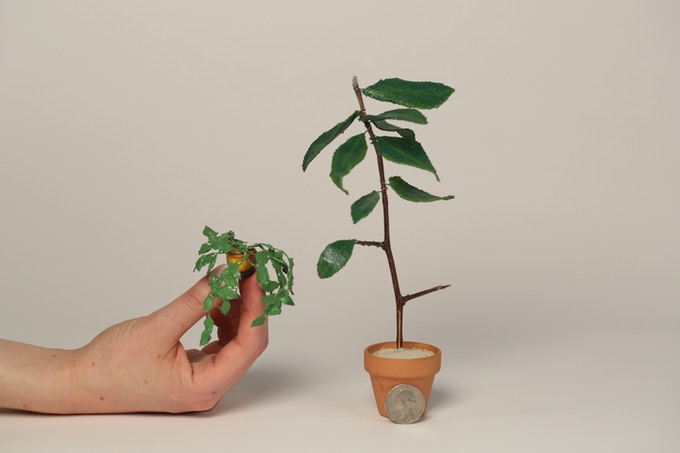 Props from the film: i.e. miniature plants!