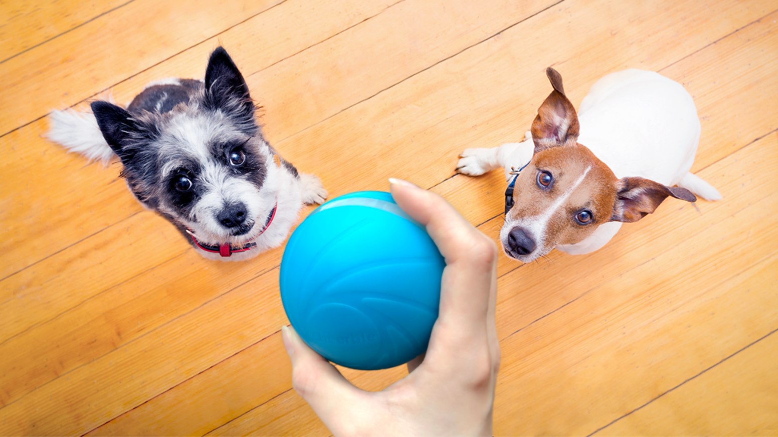 A 100% automatic ball to keep your pets company all day