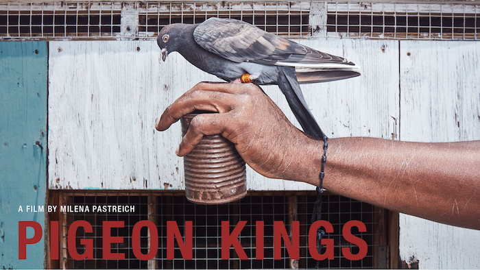 Men in South Central Los Angeles find a sense of purpose through their devotion to somersaulting pigeons.
