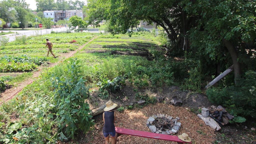 Earnest Earth Farm Chicago project video thumbnail