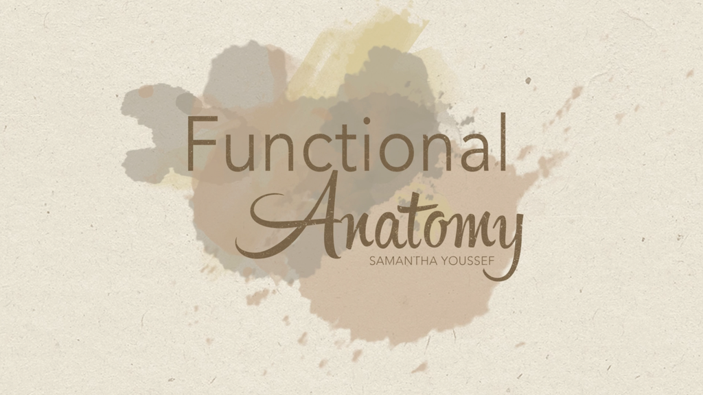 Project image for The Youssef Drawing Syllabus - Functional Anatomy (Canceled)