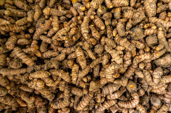 Yaksha's turmeric, waiting to be cleaned and dried by our farmer in Idukki