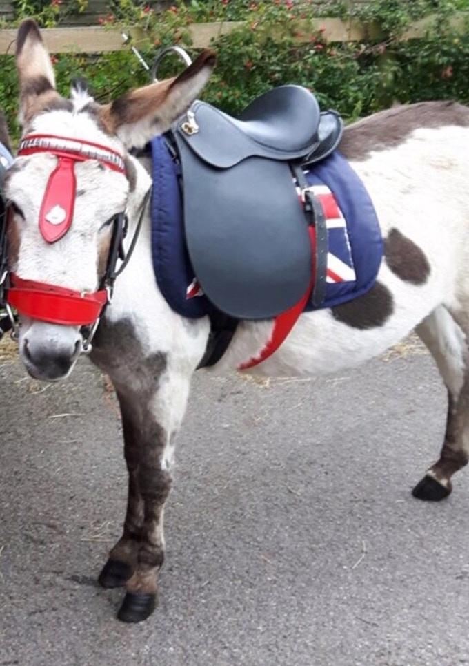 Spotty the donkey as grandma!