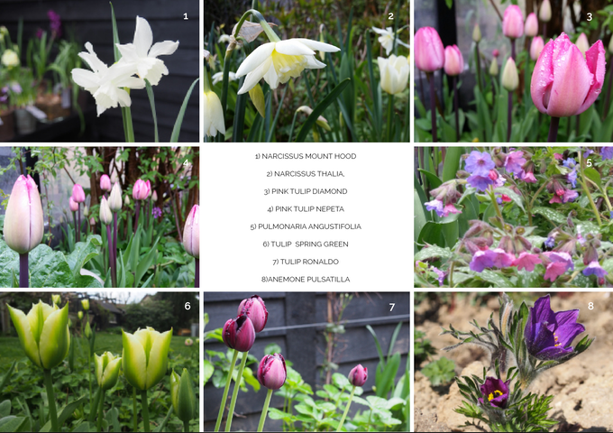 We have this nerdy passion for bulbs and perennials that area easy to maintain and that create real strong impact. We can't wait to grow our favourites and share them