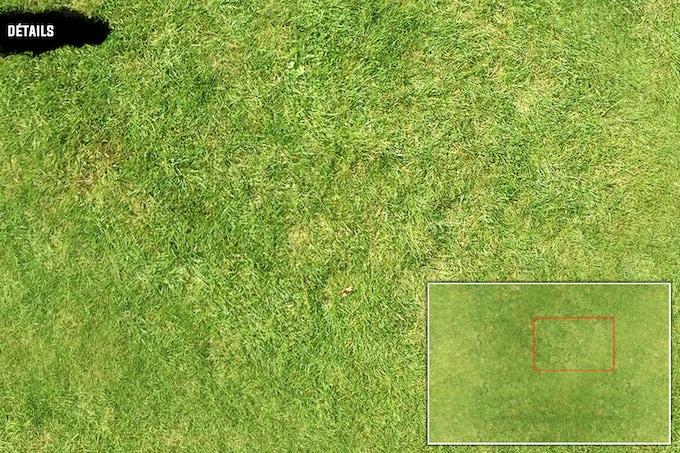 Détails : Green Field