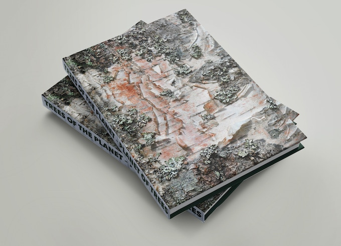 2 copies of the trade edition, maybe one for you and one as a gift (4)
