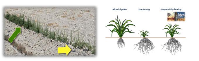 Geringe Unterschiede in der Feuchtigkeit haben große Auswirkungen auf die Entwicklung