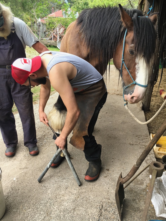 Learning to trim the feet. Working with a rasp here with my first horse mentor in New Zealand Stephen.  Stephen previously hosted my show in 2012 then horse tutored me in 2017.