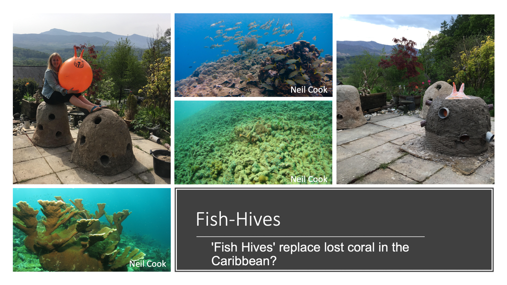 Can 'Fish Hives' replace lost coral in the Caribbean? project video thumbnail