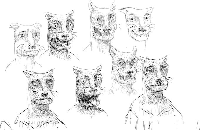 mountain lion  facial expressions