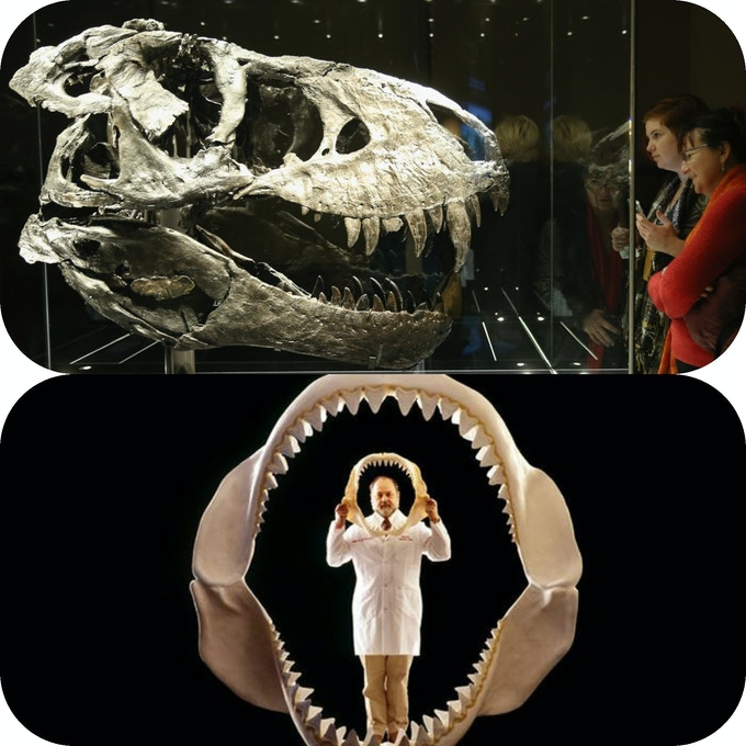 T. rex skull on top, and megalodon jaw on the bottom picture