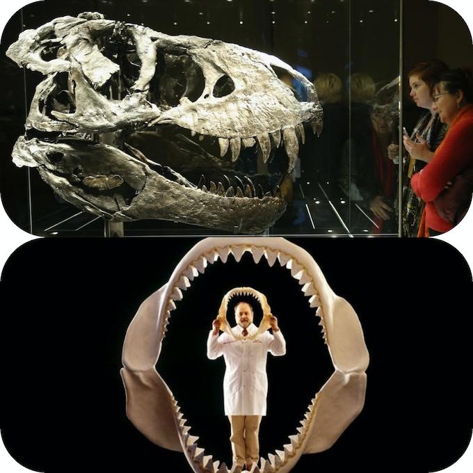 Megalodon & T REX tooth replicas by Peregrine360 — Kickstarter