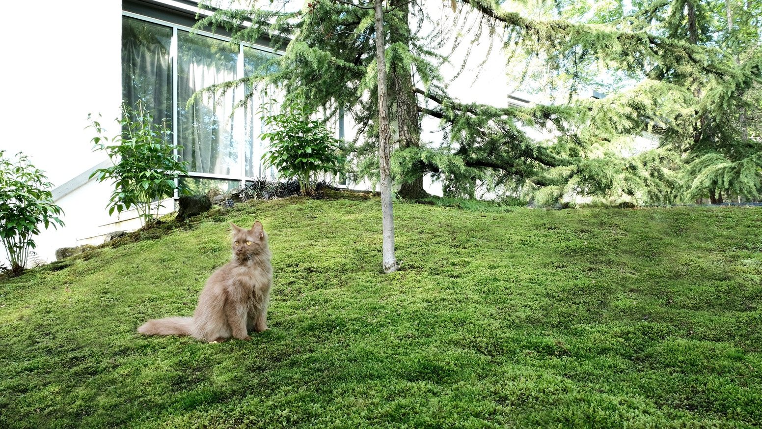 The Moss Lawn Save The Planet By Rosina Wissel Kickstarter