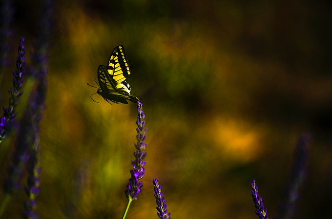 The heart and soul of the book is the surreal simplicity and serenity of the images … each a meditation on the butterfly in flight.