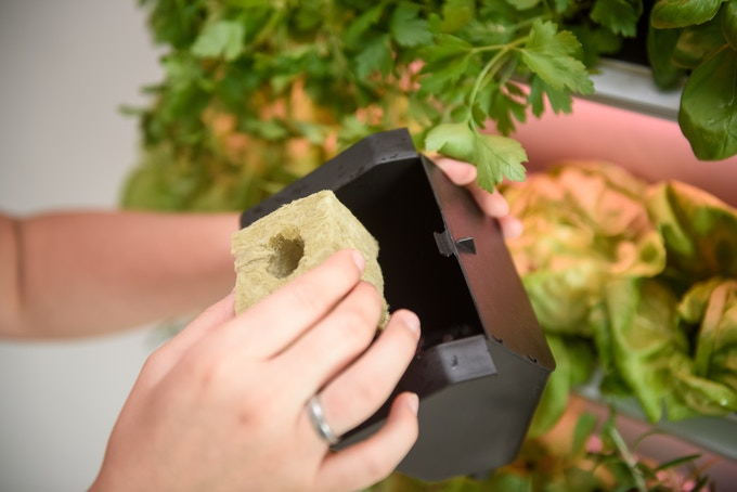 All grow pods are removable for easy planting, cleaning and harvesting