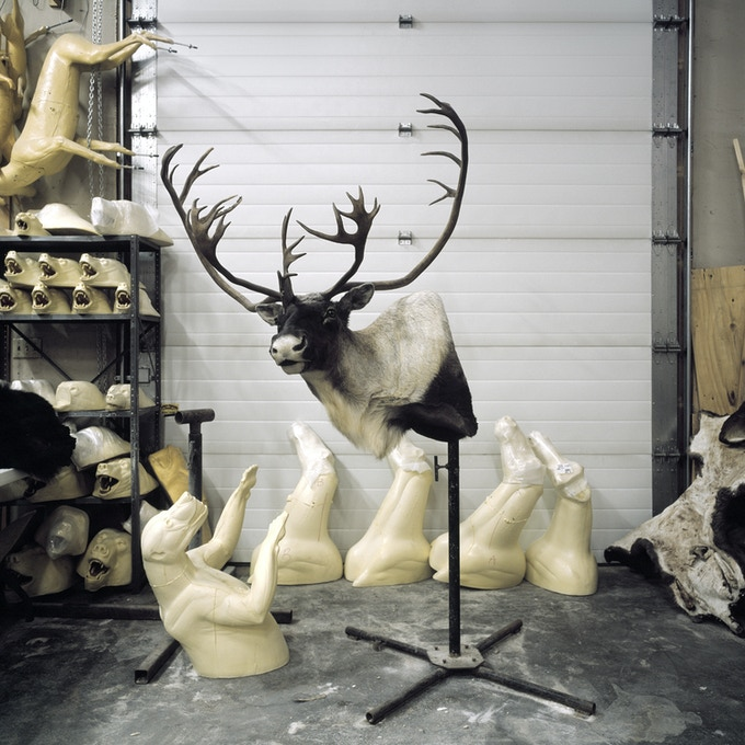 "Charlie's Taxidermy Shop, North Pole, Alaska - Signed Limited Edition 24x24"" Print"