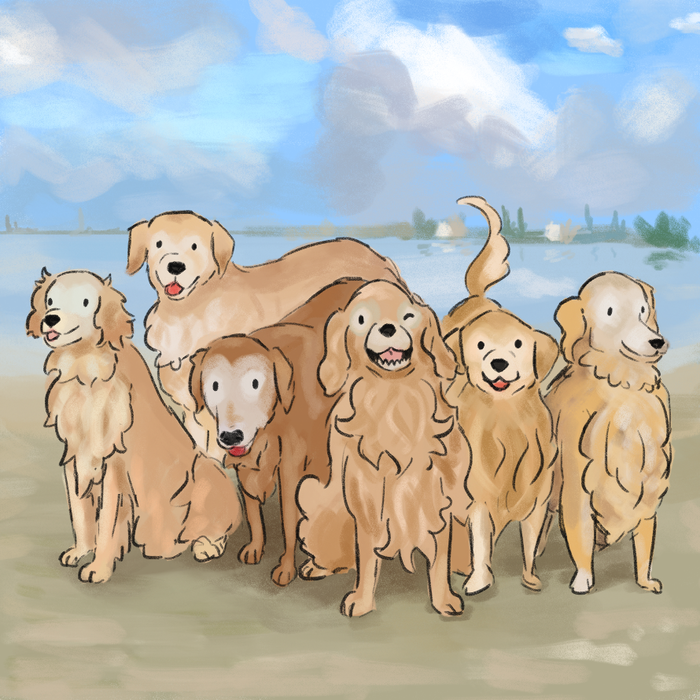 A fun illustrated children's style book about your favorite golden retrievers