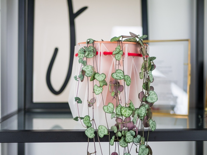 POTR Pots love the environment...they also love this string of hearts!