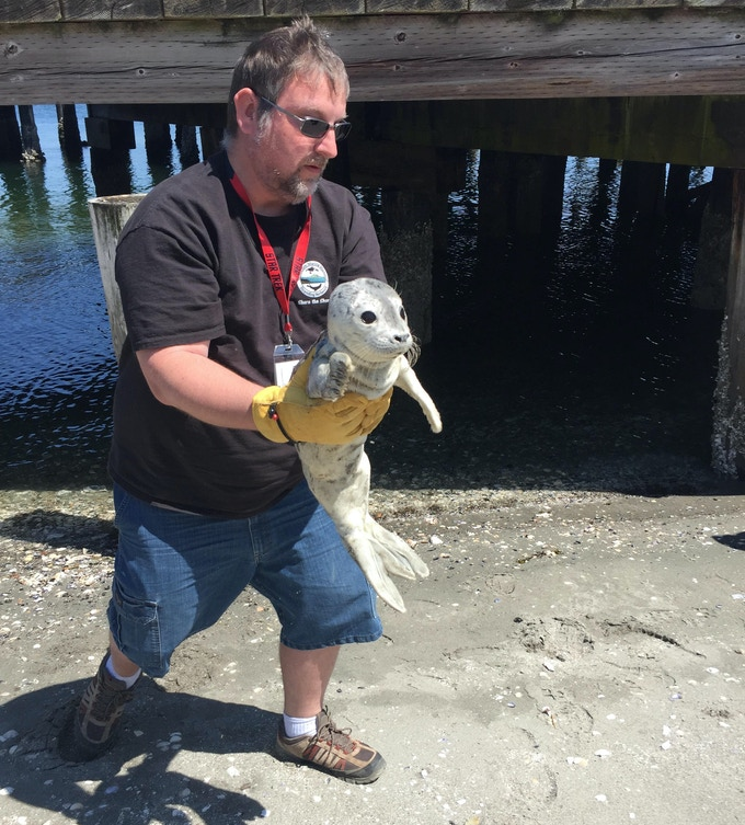 Helping rescue a harbor seal pup while volunteering with a federally sanctioned marine mammal stranding network. The seal pup went on to be successfully rehabilitated and released back into te wild.