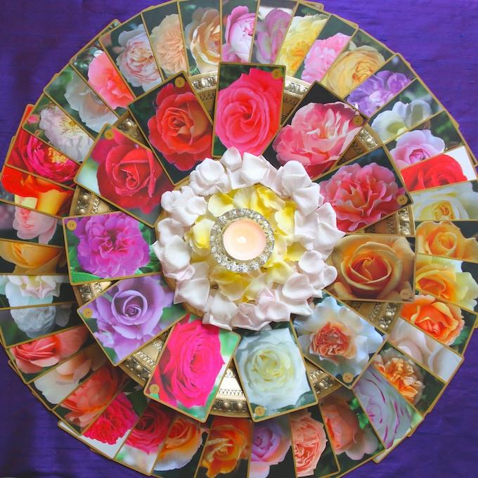A Mandala of Roses
