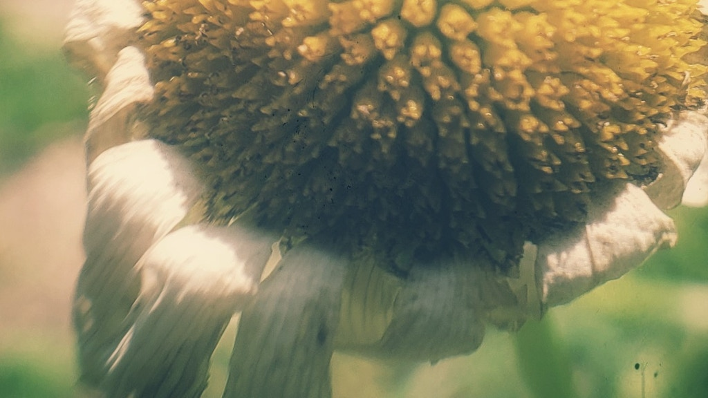 Project image for Macro Nature Photo Encaustic
