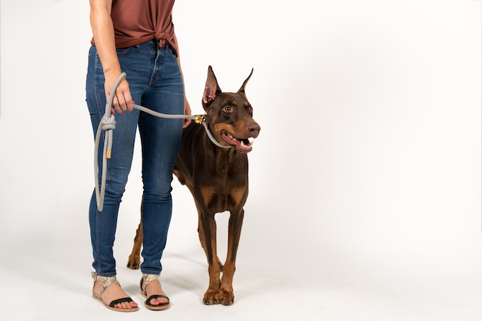A pro dog training tool with style.