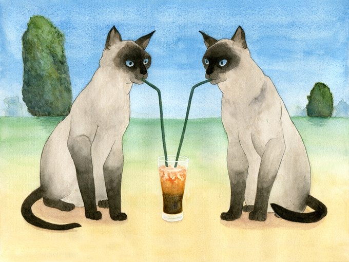 Siamese with Thai Iced Tea