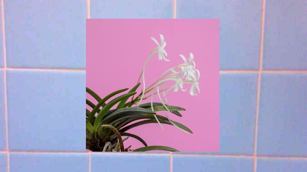 ORCHID RECEIPT SERVICE by Corinne Donly project video thumbnail