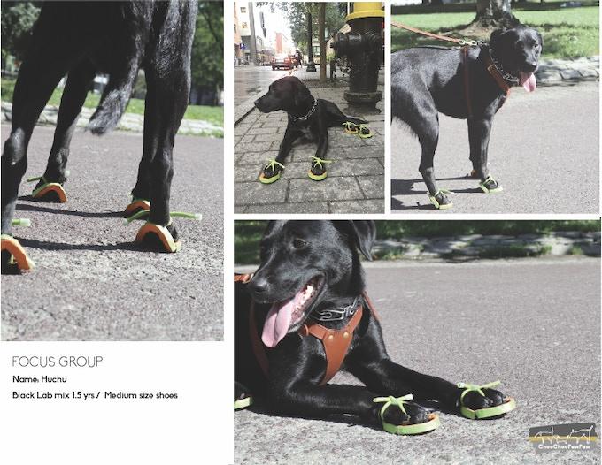Dog's Flip-Flop : Yori-Zori