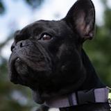 HOLY HEMP | Boxers, Yogi's, Dog Parents!