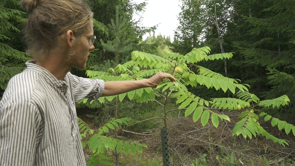 Life within Planetary Boundaries, Part 2 - Agroforestry project video thumbnail