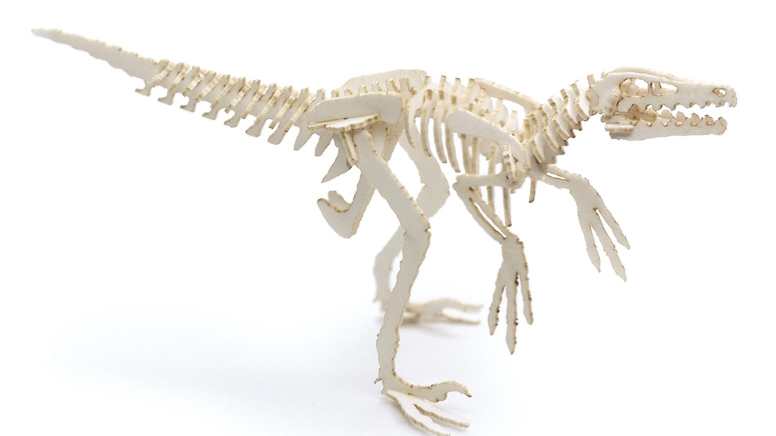 Tiny velociraptor skeleton kits and velociraptor hunting game.