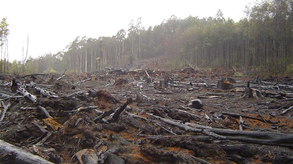 The butterfly effect: deforestation and commodities