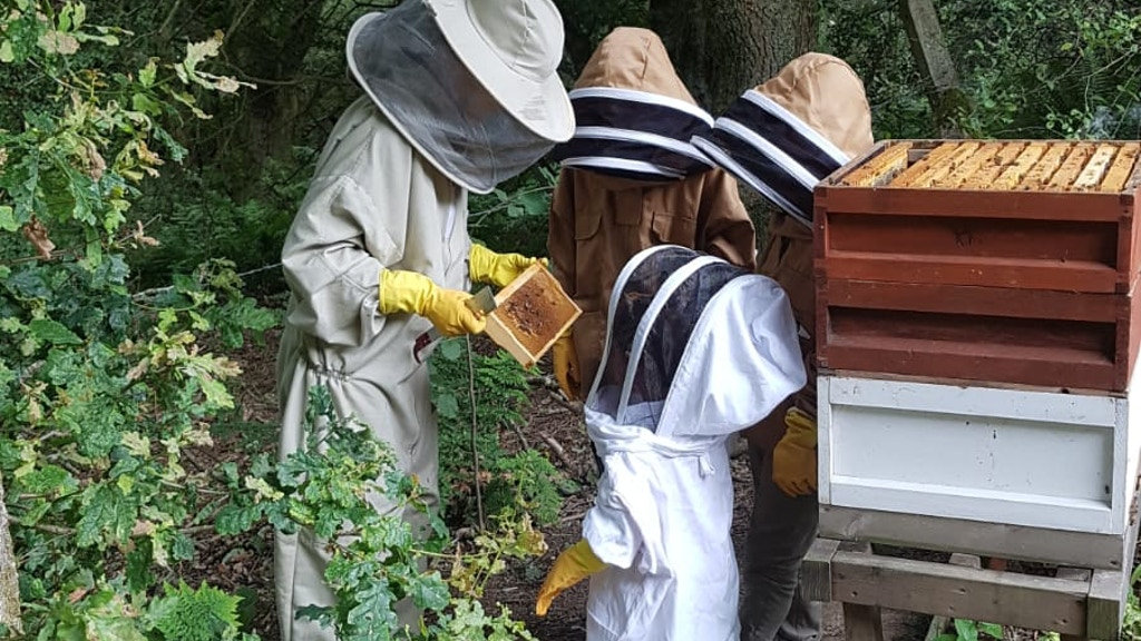 Sustainable beekeeping and educational retreat. project video thumbnail