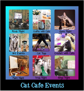 Fort Myers' Cat Cafe - Cattyshack Cafe