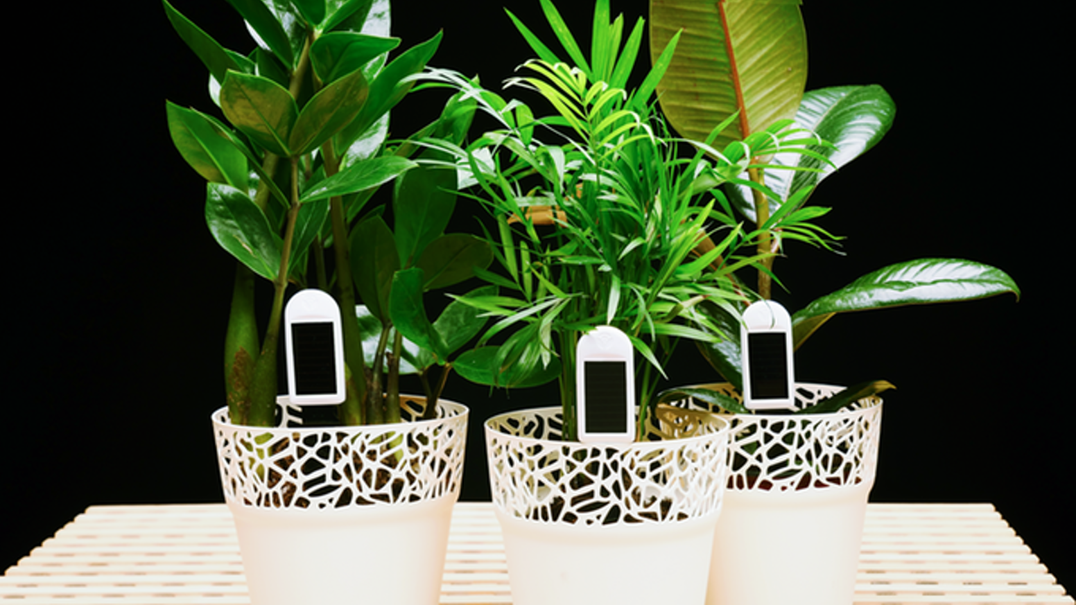 Smart greensens sensors allow you to monitor the health of your flowers and houseplants at any time and from any place.