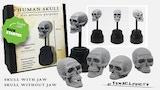 Human Skull & Multiproposal Skulls thumbnail