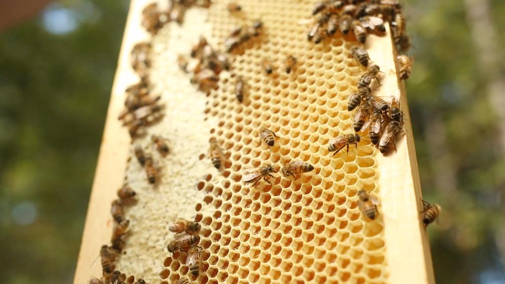 The Hives for Honey Program